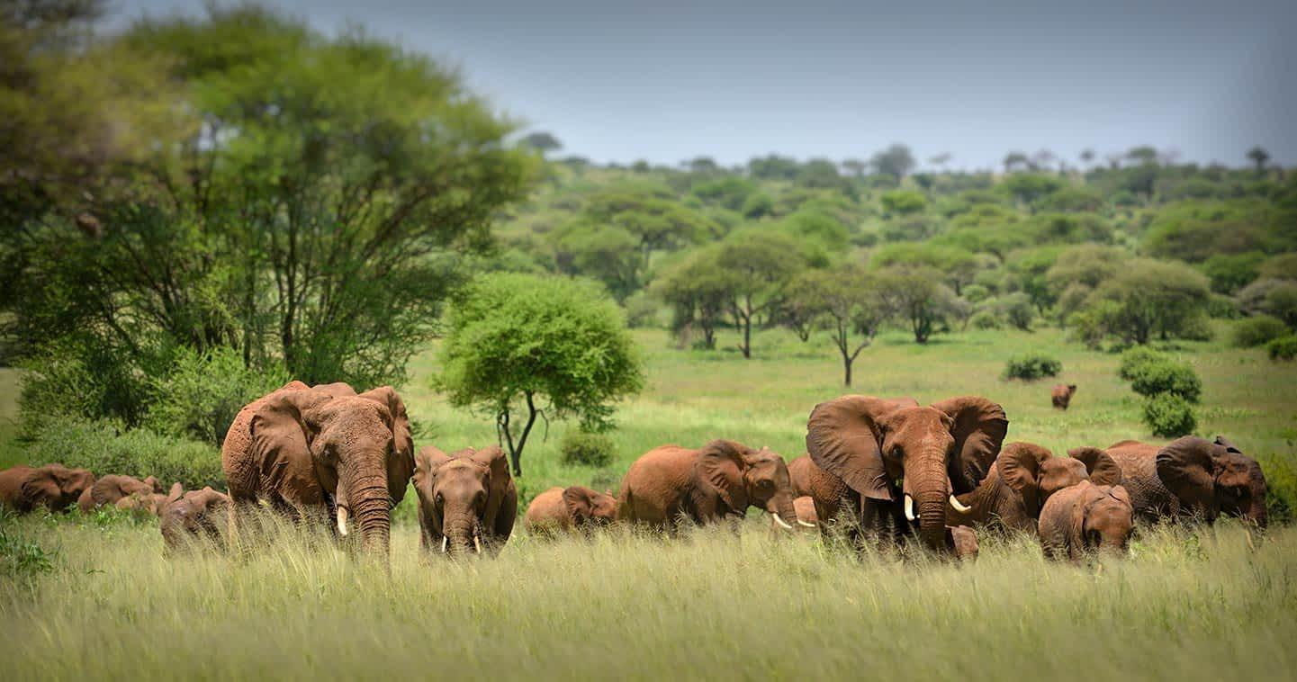 wildlife-serengeti-elephant