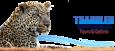 Translen Investment | Tanzania Safaris
